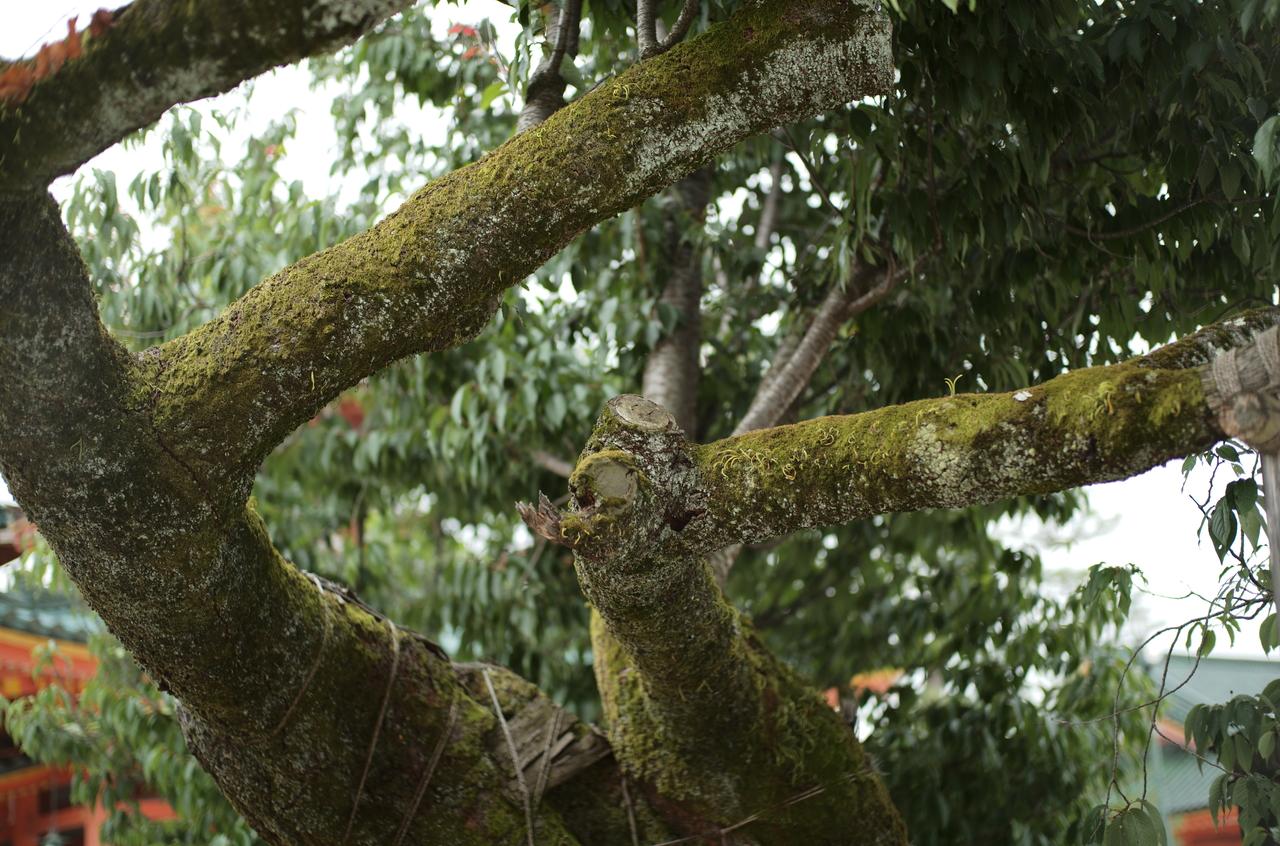 美しい樹木の苔
