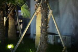 美しい樹木とライトアップ
