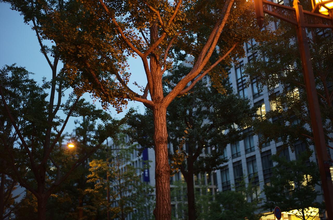 御堂筋の美しい樹木とライトアップ
