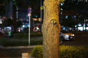 夜に撮影した美しい街路樹