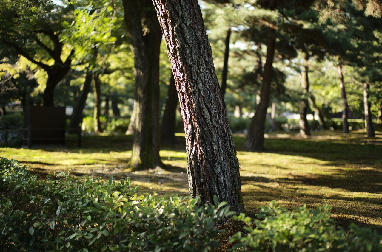 建仁寺の庭にある樹木